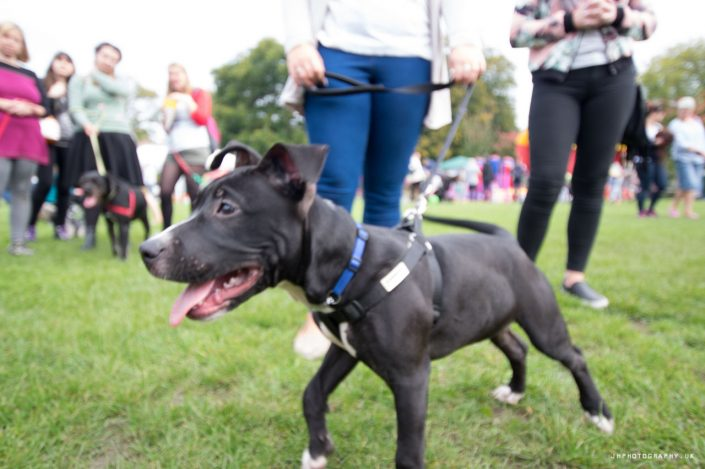 dog show photography, pet portraits